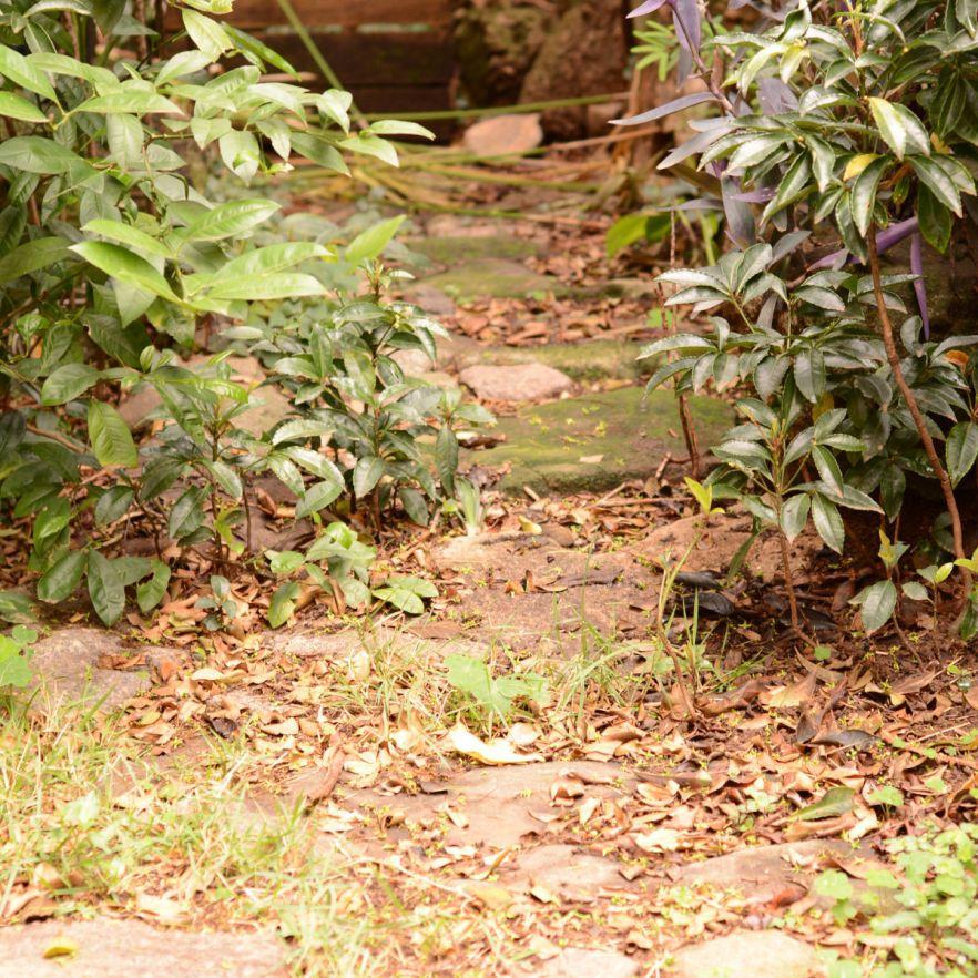 O caminho pode ser intrincado, mas é belo e vigoroso.